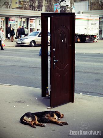 drzwi ulica ukraina