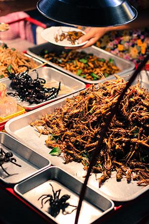 Tajlandia: TIPS & TRICKS robaki koniki polne larwy skorpiony